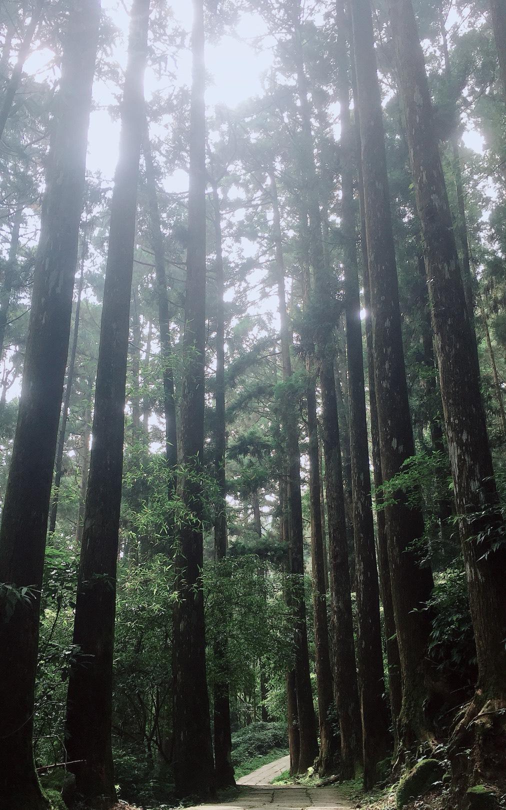 阿里山四季茶旅 夏恋森林茶会