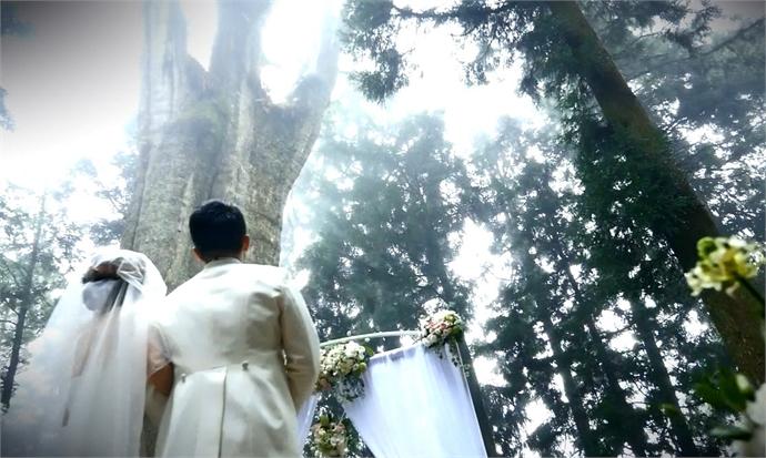 浪漫台湾度假婚礼*阿里山─千年神木真爱长久