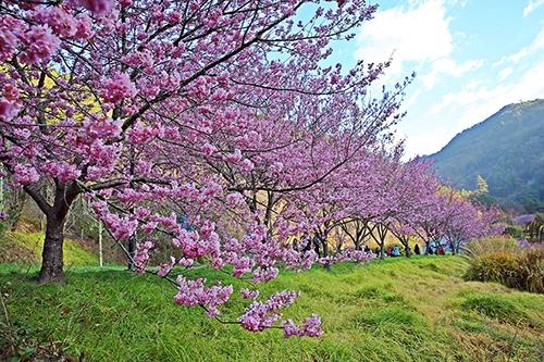 台湾观光双年历